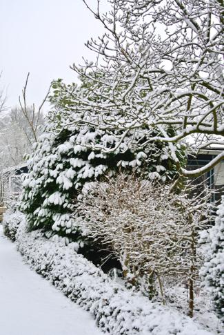 Sneeuw volkstuin Amstelglorie