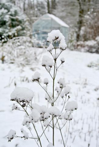 sneeuw volkstuin
