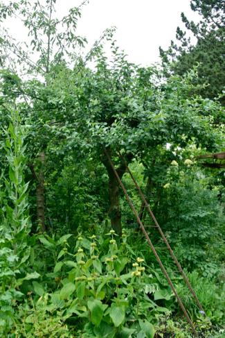 Appelboom-volkstuin