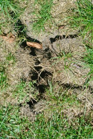 zomer-klei-scheuren-droogte